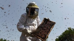 Pesticide Harms Honey Bees' Ability to Fly: UCSD Study