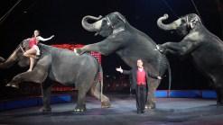 Ringling Bros. Elephants Take Final Bow