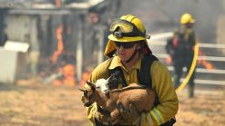 Are You Prepared for Forced Evacuation Due to a Wildfire?