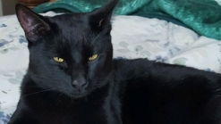 San Diego Animal Services Investigates Shooting of Cat in Lakeside