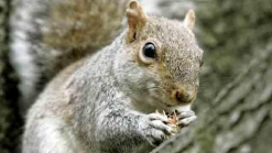 Campground Squirrel Tests Positive for Plague