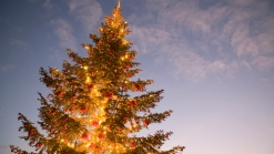 Two Tree Lighting Ceremonies in One Day