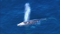 Marine Mammals Dodge Potentially Harmful Seismic Tests