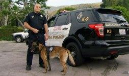 K-9 Overcomes Pepper Spray, Ravine Throw to Capture Burglars: Cops