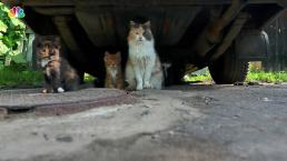 Dos and Don'ts with Stray Cats