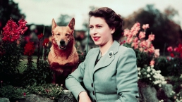 Queen Elizabeth's Royal Corgi Dynasty in Photos
