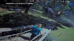 Caught on Cam: Plane Crashes Through Tree, Pilot Walks Away