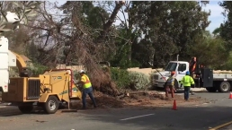 Strong Winds Sweep County, Topple Trees