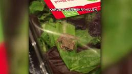 Wisconsin Family Discovers Live Frog in Salad Mix