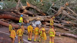 Giant Tree Crushes Woman Driving in Pacific Beach