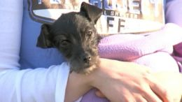Puppy Survives Weeks Locked in Car