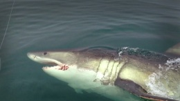 Great White Shark Sighting Off N.J.