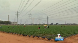 Future of Carlsbad Strawberry Fields Worries Locals