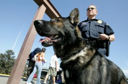 K9 Competition Features Police Dog Takedowns