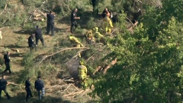 8 Children Injured, 2 Critically, by Falling Tree Near SoCal Museum