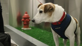 Wee-lief! Dogs Get Special Bathroom at JFK Airport