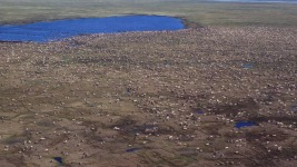 Lawmakers Renew Push for Drilling in Alaska Wildlife Refuge
