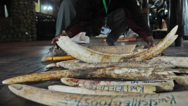 Obama Unveils More Ivory Sale Restrictions During Africa Trip