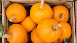 Pumpkin Shortage Could Mess With Your Thanksgiving Pie
