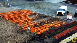 Nearly 200 Pumpkins Stolen from New Jersey Farm Stand
