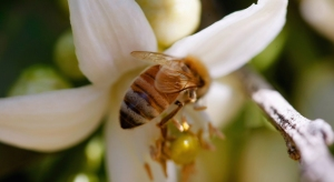 Dr. Jackie: Summer Bee Safety