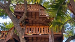 Fate of $16K Tree House Uncertain