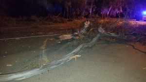Tree Topples Onto Young Man's Car in Escondido