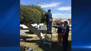 Firefighters Go Above and Beyond During Distress Call