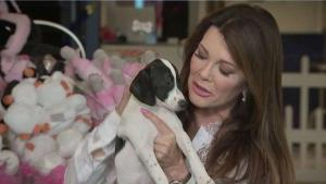 Shelter Pups Get Celebrity Treatment at Vanderpump Dogs