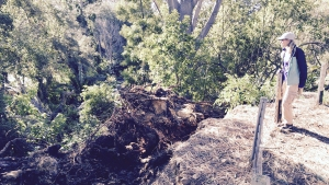 Trees Destroy Popular San Diego Wedding Spot