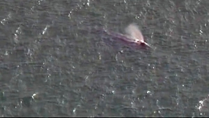 Coast Guard: Whale Spotted in San Diego Bay