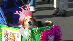 Bedazzled Pooches Strut Their Stuff at Doggie Mardi Gras
