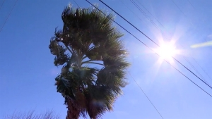 High Wind Warning in Effect for San Diego County