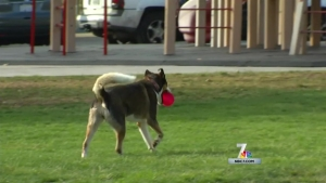 Neighborhood Dilemma: Off-Leash Dog Parks