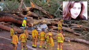 Memorial Set for Musican Killed by Falling Tree