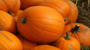 Fall Pumpkin Patches in San Diego