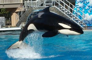 SeaWorld San Diego's Orca Show Closes