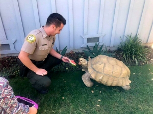 Tortoise Returned Home After Wandering Around NorCal Town