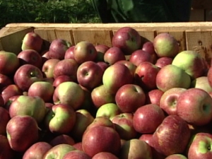 Take a Bite Into Apple Season