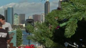 Coronado is Home to the World's Prettiest Christmas Tree Lot