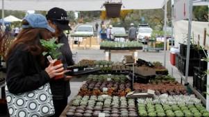 Spring Planting Jubilee at San Diego Botanic Garden