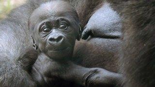 Adorable Zoo Babies: Baby Elephant at the Houston Zoo