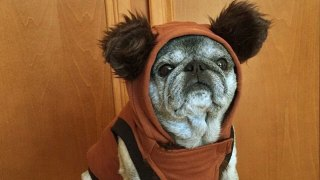 Images: Comic Con Critters