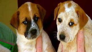 Drainpipe Puppies Up for Adoption