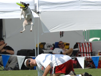 Little Dog Catches Big Air