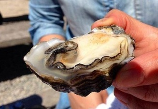 Central Coast Oyster & Music Festival