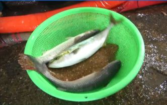 Fish Feel Pain, Now What? Local Fishermen Weigh In