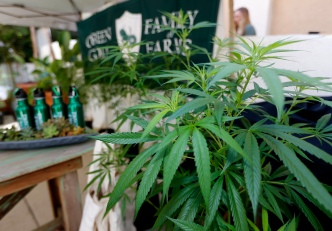 California Regulator Admits to Anxiety as Legal Pot Nears