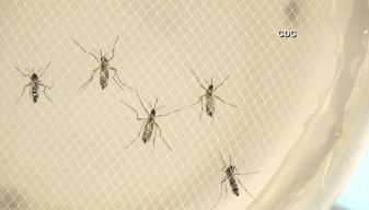 Texas Zika Case Is 1st Transmitted in U.S.: CDC