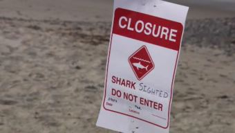 Dozens of Shark Sightings Close Beach in San Clemente